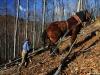 2007-12-13-tazba-dreva-01