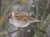 04-04-vrabec-polny