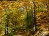 Jesenná alej -Lenka Valentová