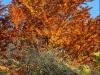 Jesenná paleta I. - Lenka Valentová