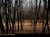 V lese- Lenka Valentová