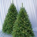 zber vianočných stromčekov podkonice